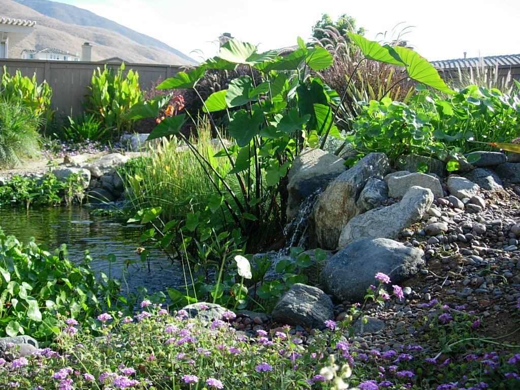 Water gardens aquatic plants joe the fish guy for Garden pond plants